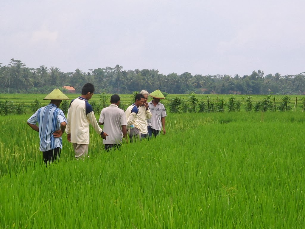 Pembangunan Pedesaan dan Perkembangan Pertanian oleh Nestlé
