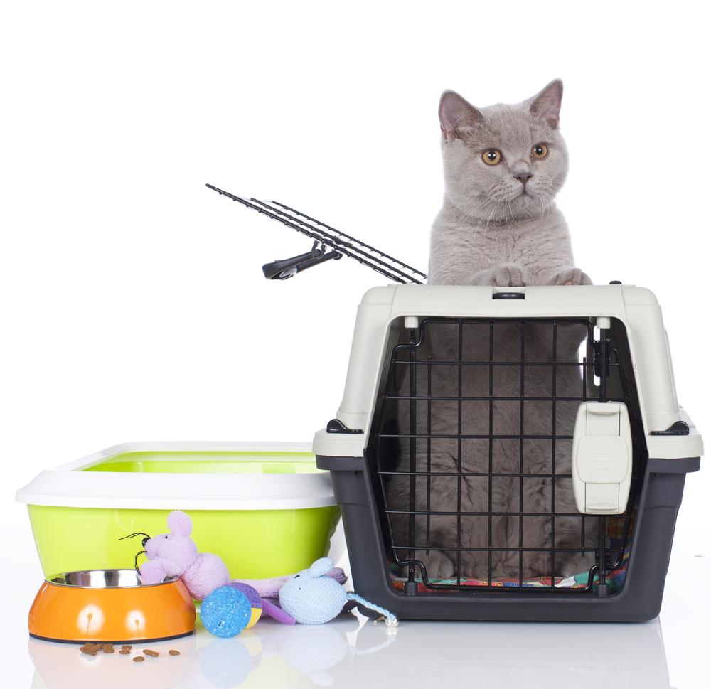 Daftar Perlengkapan Wajib Sebelum Memelihara Kucing